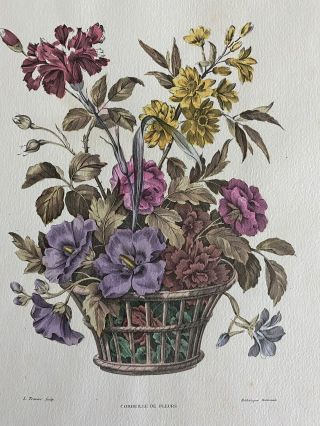 Four Botanical Flowers in Vases hand-colored engravings